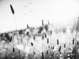 Allergibehandling hos Dahl Akupunktur Hobro